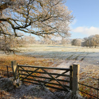 Frosty scene of field over gate with mature trees in the distance