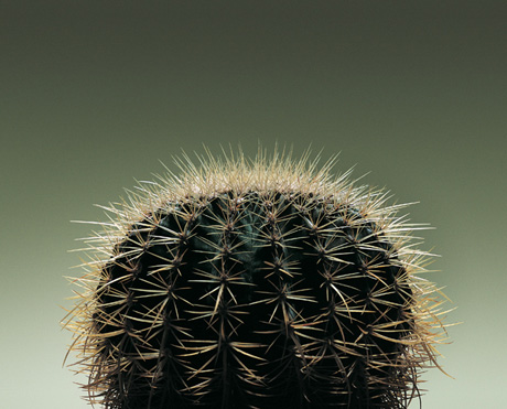 Side shot of Cactus