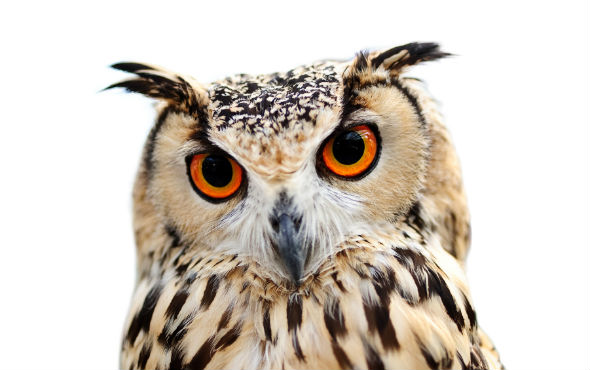 Owl looking wise