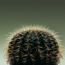 Cactus from side - resembling the back of a person's head