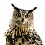 Owl looking knowingly