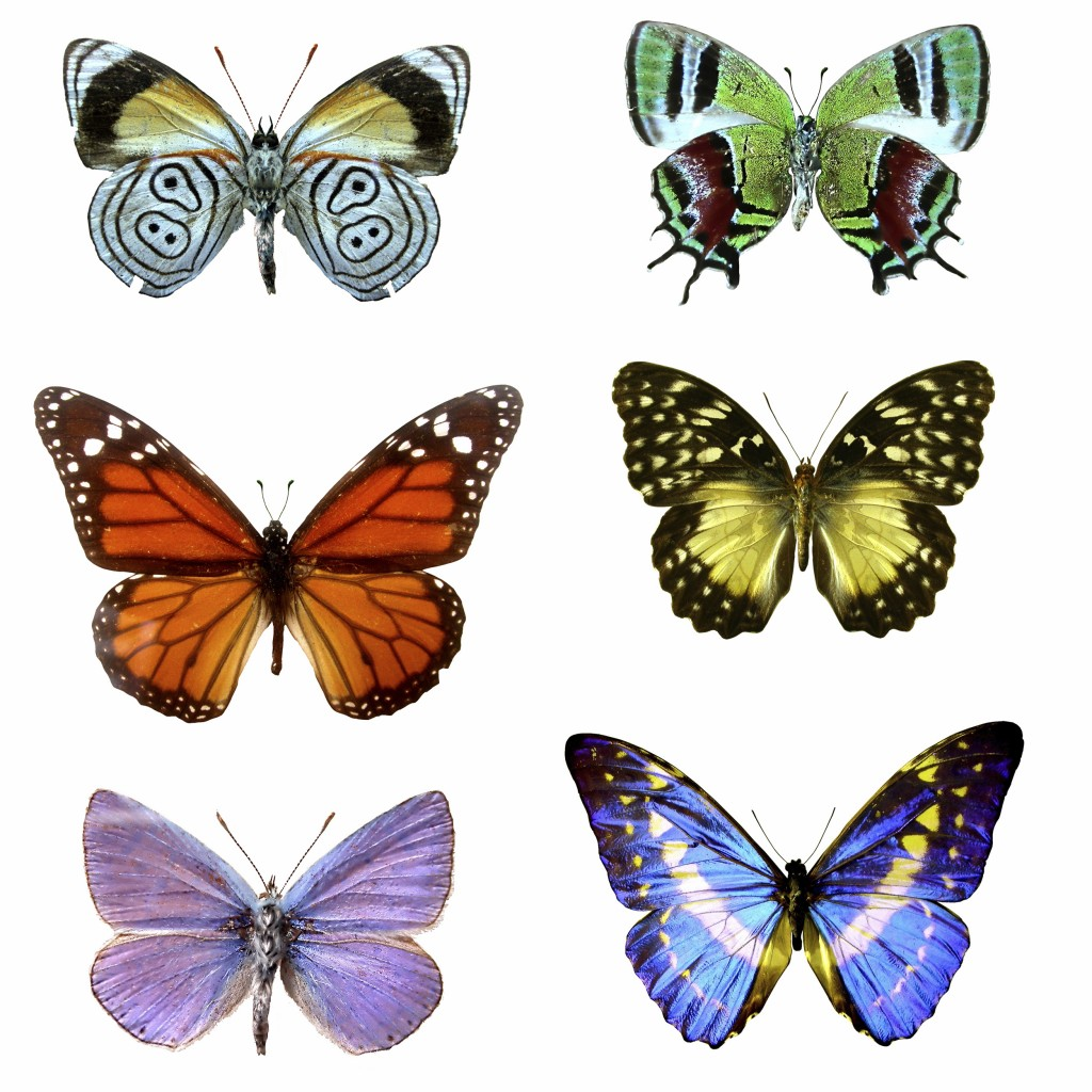 Different sized and coloured butterflies depicting change