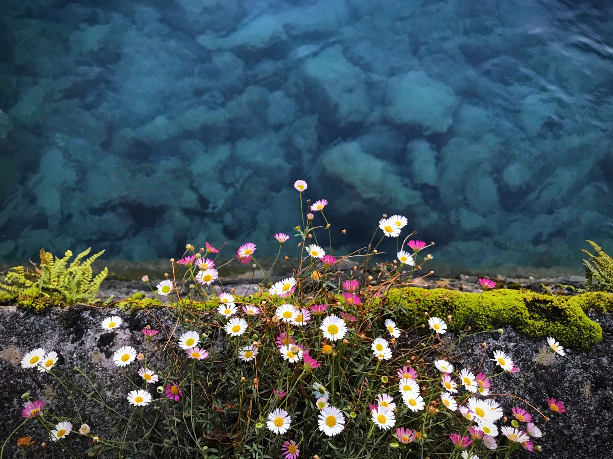 Flowers growing on a cliff face