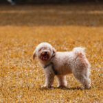 Small dog standing on grass