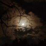 The silhouette of a tree branch under white cloudy skies during night time