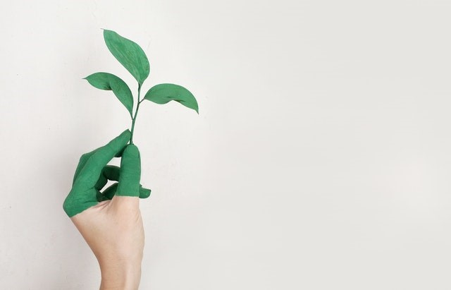 A person's left hand holding a 3 leafed plant with both the plant and the fingers of the hand painted green.