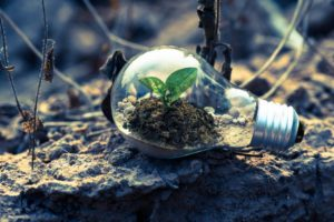 A clear lightbulb with a small plant growing inside it, sitting on stony earth