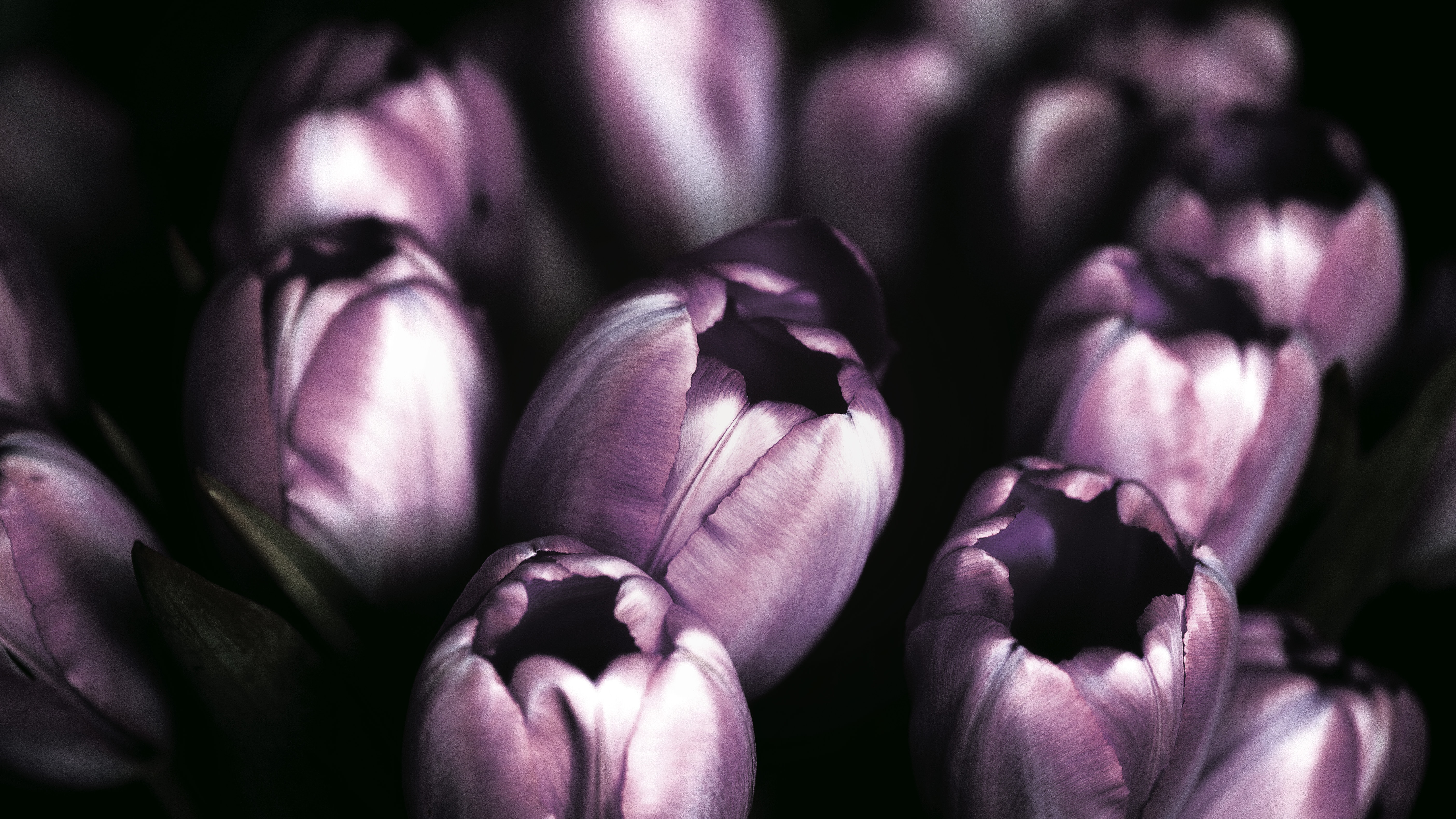 Flowers in dark shade