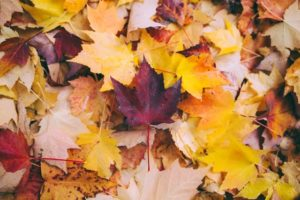 Autumn leaves for Autumn newsletter
