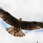 A hovering red kite - How would learning mindful techniques benefit my performance at work?