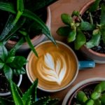 Photo of a mug of coffee with a frothy leaf pattern surrounded by house plants