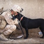 A soldier in camouflage uniform crouched down to be level with a black labrador dog and cuddling its head
