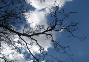 Photo taken from below of the bare branches of a tree against a cloudy blue sky